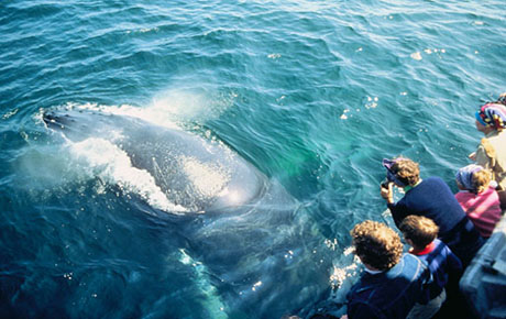 Watching whales in the Dominican Republic